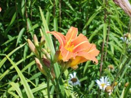 Flowers - Orange Lily 1. by MystStock