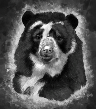 Spectacled Bear by raisaoren