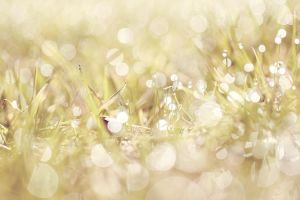 beauty grass by theveronicca