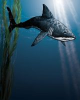 Great White by Fenster