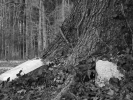 Tombstone resting on tree by rosebud263
