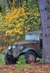 Old truck in the Fall by finhead4ever