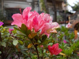 Flower Episodes I - 2 by Mountshire