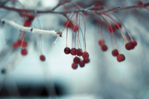 Berry november by RasentPuls