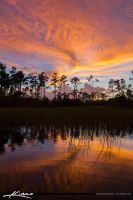 Florida-Sunset-Pine-Forest-Wetlands-Tall by CaptainKimo