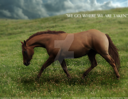 Where We Are Taken by CoutureEquineDesigns