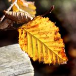 A Simple Leaf by s-kmp