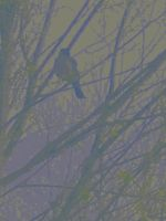 Fogged Visitor by That-Warm-feeling