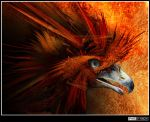 FireBird - FINAL by ZsArtEr