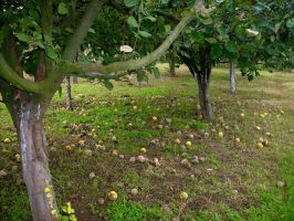 Tree and fallen fruits by Darito111