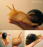 My Petsnail by FlyQueen
