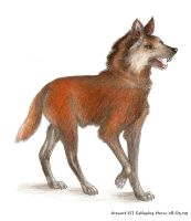 Maned Wolf by RivenPine