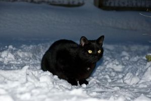 Cat in snow stock by Quinnphotostock