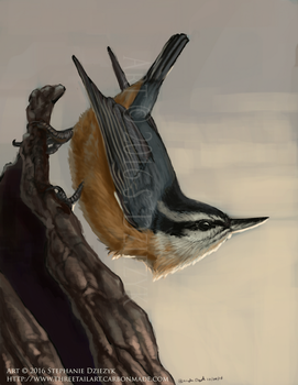 Evening Nuthatch by LeccathuFurvicael