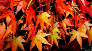 Crimson Leaves by SkT0330