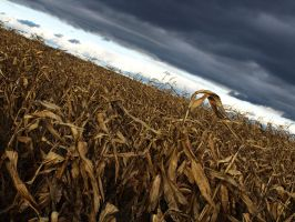 The Death of the Corn by JJM1981