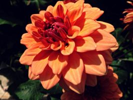 Cherish Orange by kml91225