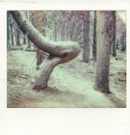 Bent Tree by InstantPhotographer