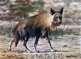 Brown Hyena by WillemSvdMerwe