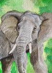 ACEO-Elephant by WitchiArt