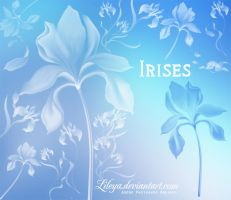 Irises by Lileya