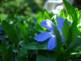 Periwinkle 2 by Holly6669666