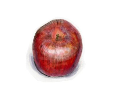 Apple Sketch 03 color by theblindalley