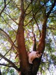 Tamarind tree is cozy by plainordinary1