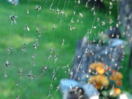 caught in a web of flies by Hidhabwanath