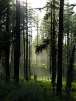 Misty Forest stock by rocamia-stock