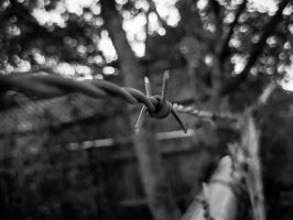 barbed wire by pumkat