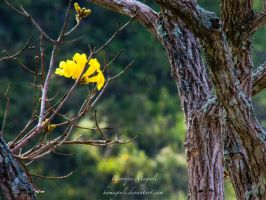 Life in the tree by HenriqueAMagioli