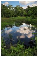 Swampy Reflection by DennisChunga