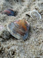 Shell by jhonv