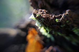 Mossy trunk by User-9