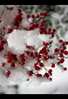 Red Cold by My-Shadows-Limit