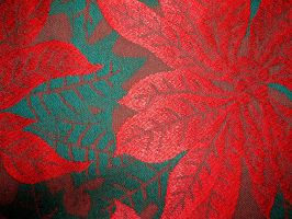 Poinsettia Christmas Pattern 4 by FantasyStock