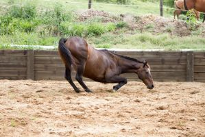KM Old TB leaning down to lay side view by Chunga-Stock