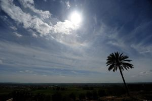 palm under the sun by ITphotography
