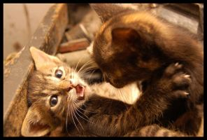 Cats Fight by GreenStain