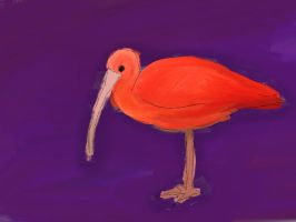 Red Ibis by Isotoperuption