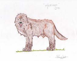 Hershey - Real Life Drawing by PeaceWolfCreations