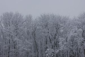 The Sea Of Unending Snow Trees by Mirag3-Photography