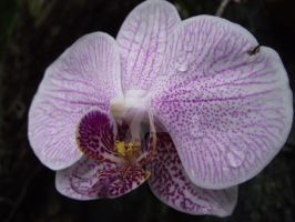 Orchidstra by njbartworks