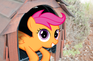 Scootaloo in a Box by orangel8989