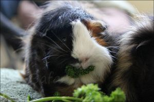 Say Parsley by Bafa