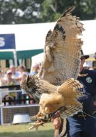 Eurasian Eagle Owl Stock 5 by LRG-Photography
