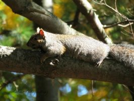 Laying Low... by Michies-Photographyy