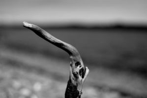 The wail of driftwood by maddog1138
