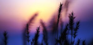 Grasses in a Softer Light 2 by UnderTheWildMoon